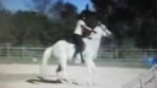 Изнанка конного спорта