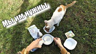 Твори добро / Бездомные животные