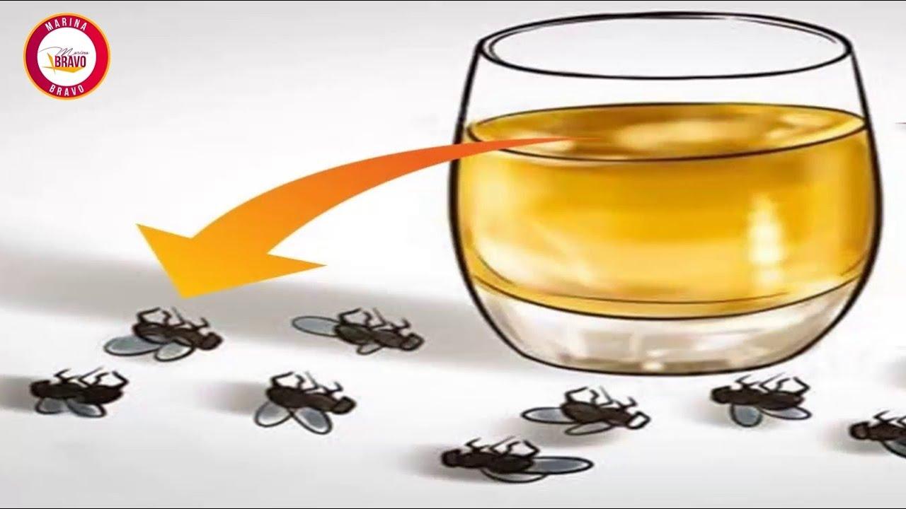Coloque esto y en dos horas no habrá 1 sola mosca, cucaracha, ni mosquitos