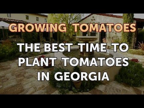 The Best Time To Plant Tomatoes In Georgia