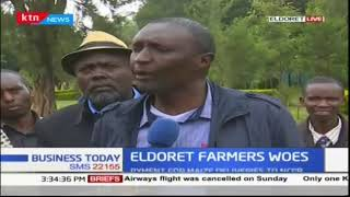 Uasin Gishu farmers demand that government pays Kshs.3.7 | Business Today