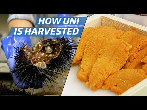 How Sea Urchin (Uni) Is Processed Commercially — How to Make It