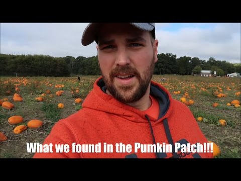 You will never believe what we found in the pumpkin patch!!!