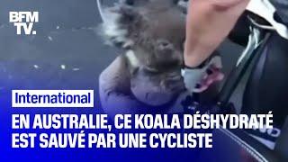 En Australie, un cycliste s'arrête pour hydrater un koala