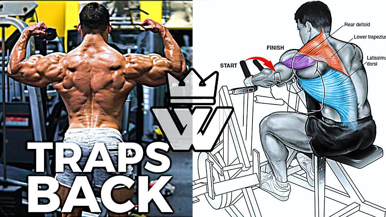 11 Exercises for MONSTER TRAPS & BACK Workout