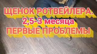 ЩЕНОК РОТВЕЙЛЕРА 2,5-3 МЕСЯЦА. Первые проблемы.