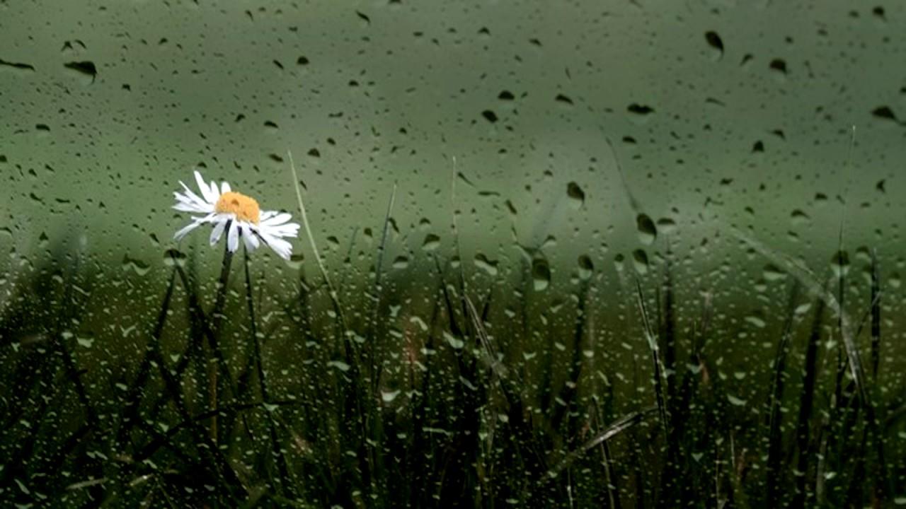 As The Rain ringtone free download