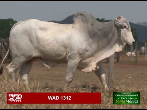 LOTE 22 - WAD 1312