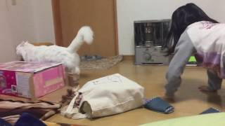 貞子のような娘に追いかけられるピチ太郎です。