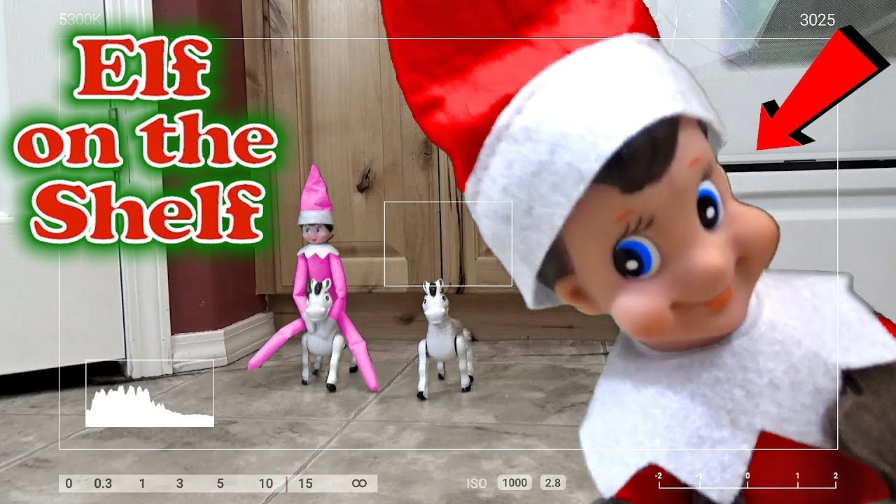 Purple Amp Pink Elf On The Shelf Caught Moving On Real