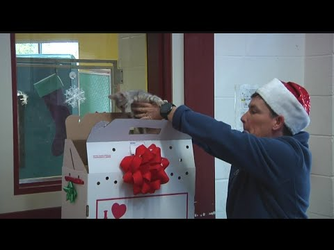 Charleston Animal Society's Home for the Holidays program
