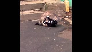Кошки трахаются!)