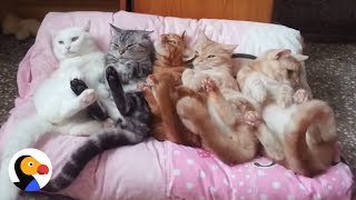 Cats Sleep Together at Cat Slumber Party | The Dodo