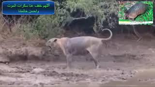 شاهد سكرات الموت عند الحيوانات فيديو يجعلك تنهار من البكاء اللهم ارحمنا و خفف سكرات الموت عنا