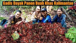🔴Gadis Dayak Panen Buah Khas Kalimantan   Kehidupan Suku Dayak Pedalaman Kalimantan Barat