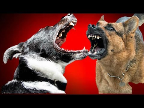 how to write dog barking sounds
