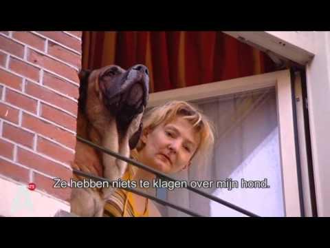 Angst voor agressieve hond in de Van Ostadestraat