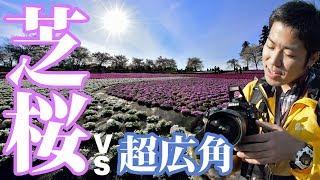 【写真撮影】Nikon AF-S NIKKOR 14-24mmF2.8G EDの広角レンズで地面スレスレに咲く芝桜を印象的に撮る【オート先生】