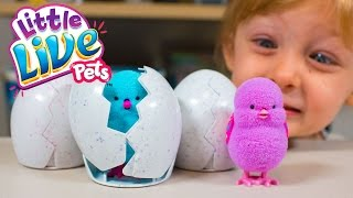 NEW Little Live Pets Surprise Chick Surprise Eggs Toys for Girls Moose Toys Kinder Playtime
