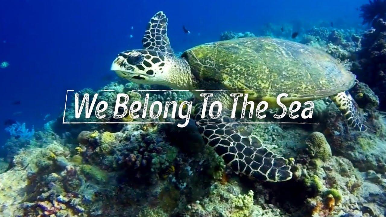 We Belong To The Sea // Mabul island 2017