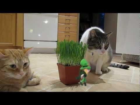 Leprechaun Pranks Cats