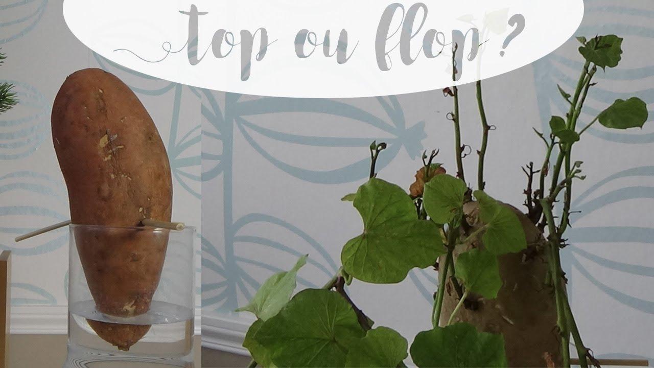 top ou flop je transforme une patate douce en plante. Black Bedroom Furniture Sets. Home Design Ideas