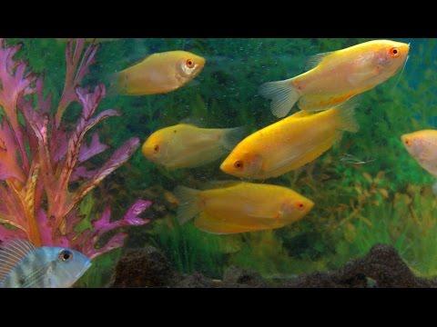 Aquarium Life - Voyeuristic Hypnotic 90 mins