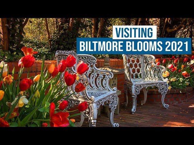 Visiting Biltmore Blooms 2021