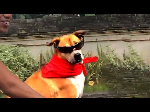 DOG VIDEOS FOR YOUR THANKSGIVING WEEKEND! Funny Videos