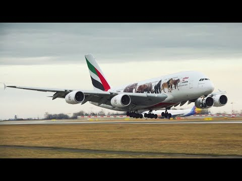 World Wildlife Day | Emirates Airline