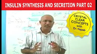 Insulin Synthesis and Secretion 2/4