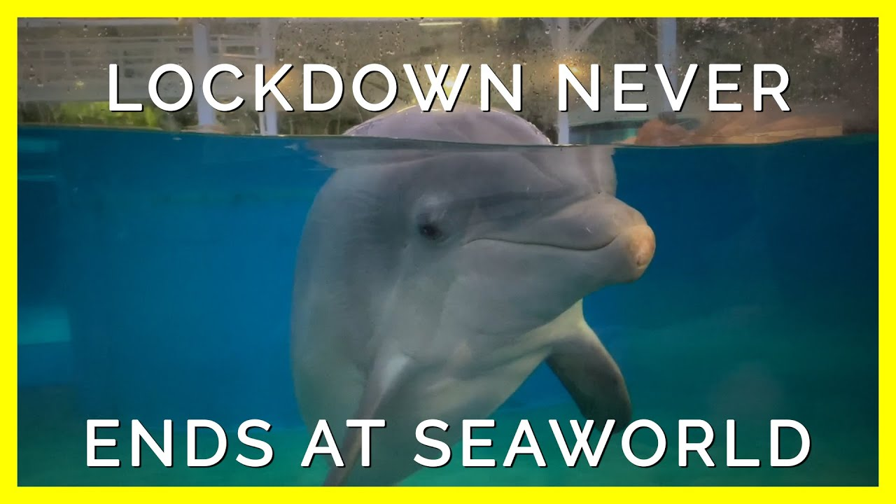 Lockdown Never Ends for SeaWorld's Prisoners