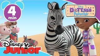 Dottoressa Peluche - Ospedale dei giocattoli | Una zebra giocattolo selvatica - Disney Junior Italia