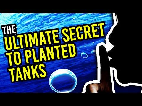 Aquarium Plants Photosynthesis - The Ultimate Secret You MUST Know!