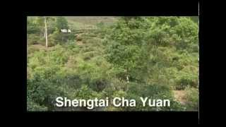 very  interesting way  to make Chinese Tea( Tea Pu erh Tea Cultivation in Yunnan medium0