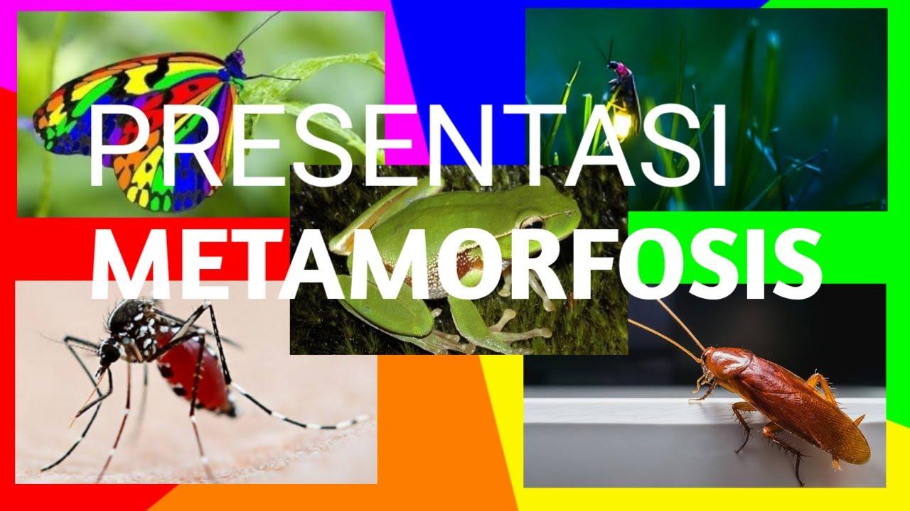 Metamorfosis Hewan Metamorfosis Sempurna Dan Tidak Sempurna Youtube