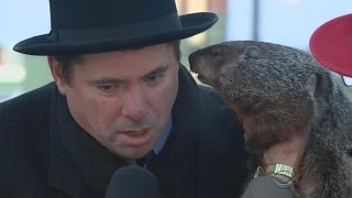Runaway groundhog leaves Wisconsin town looking for a replacement