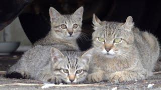 トラックの下で母猫に甘えまくる子猫達