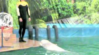 Дельфины и дети