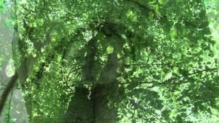 """Ombra mai fu - Rez. und Arie aus der Oper """"Xerxes"""" von G.F. Händel"""