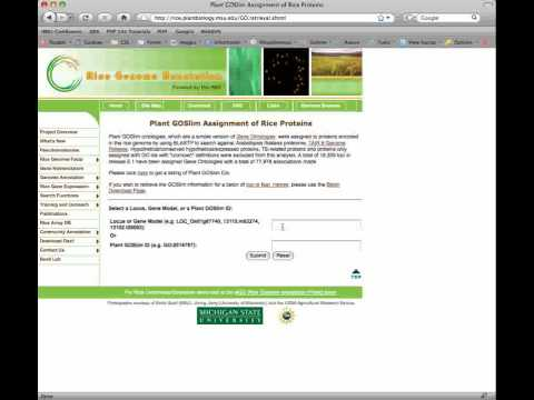 Rice Genome Annotation Project Website: Search Tools Tutorial