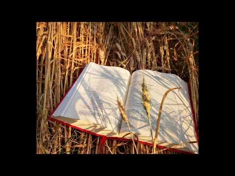 letture-e-vangelo-del-giorno---venerdì-2-agosto-2019-(audio-letture-della-parola)