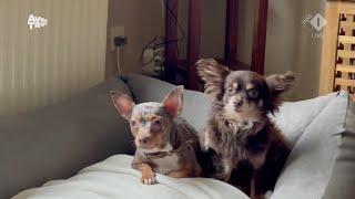 Een hond adopteren? Bij Rescue Dogs Europe kan dat flink in de papieren lopen