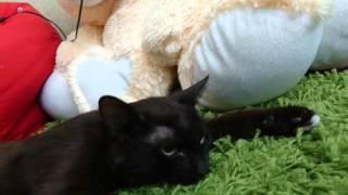 Кот допрыгался