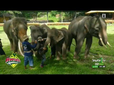 ย้อนหลัง ขี่ช้างเที่ยวป่าสุดฟิน จ.สุราษธานี | 25-06-60 | ตะลอนข่าวสุดสัปดาห์
