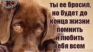 SEMAVI   забота о бездомных животных !