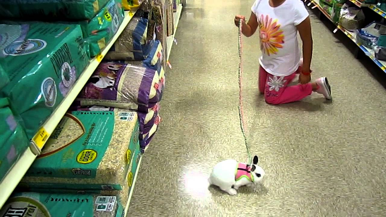 Out Shopping With Bunny Rabbit At Petsmart Youtube