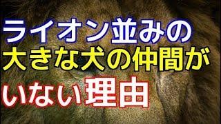 チャンネル登録はこちらからも可能です☆→http://ur0.pw/Gf0q このチャン...