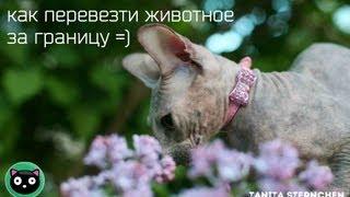 Как перевезти животное за границу =)