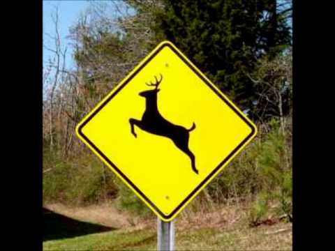 ORIGINAL - Please Move The Deer Crossing Sign. thumbnail